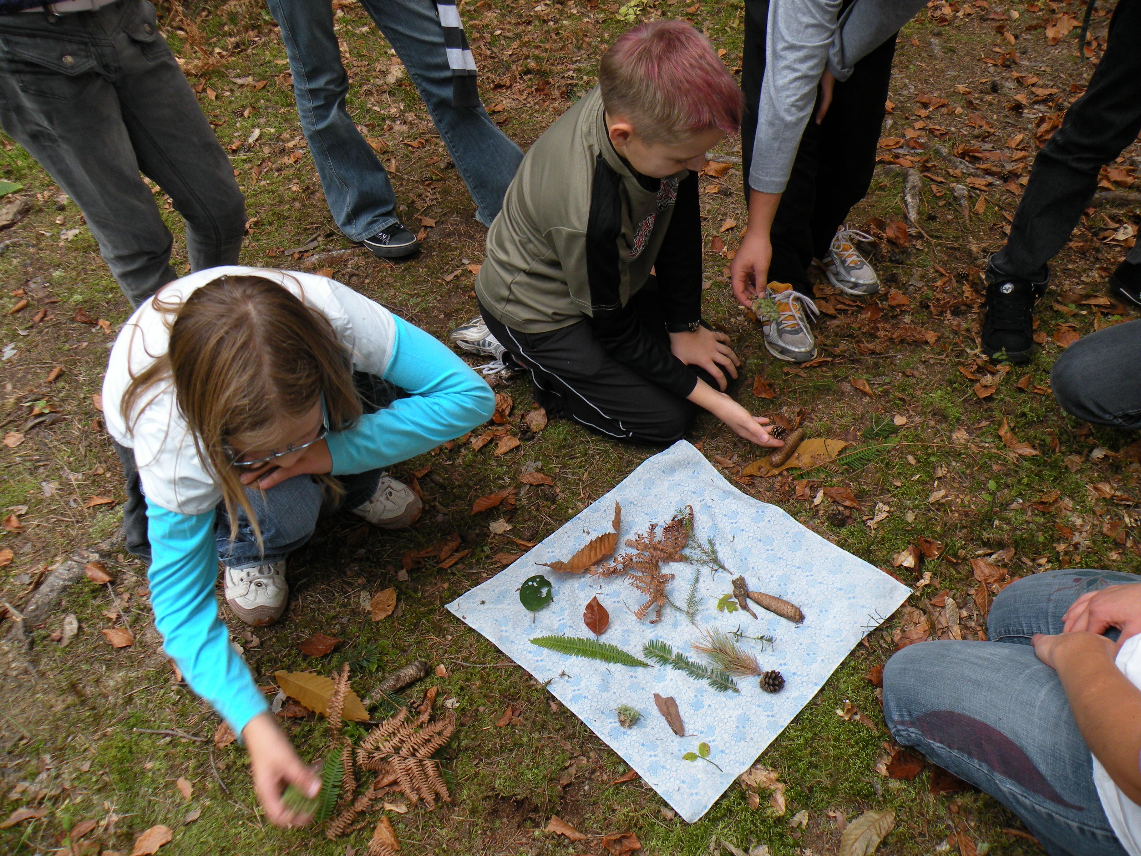 Gozd skriva zdravje in dobrote – odkrijmo jih!