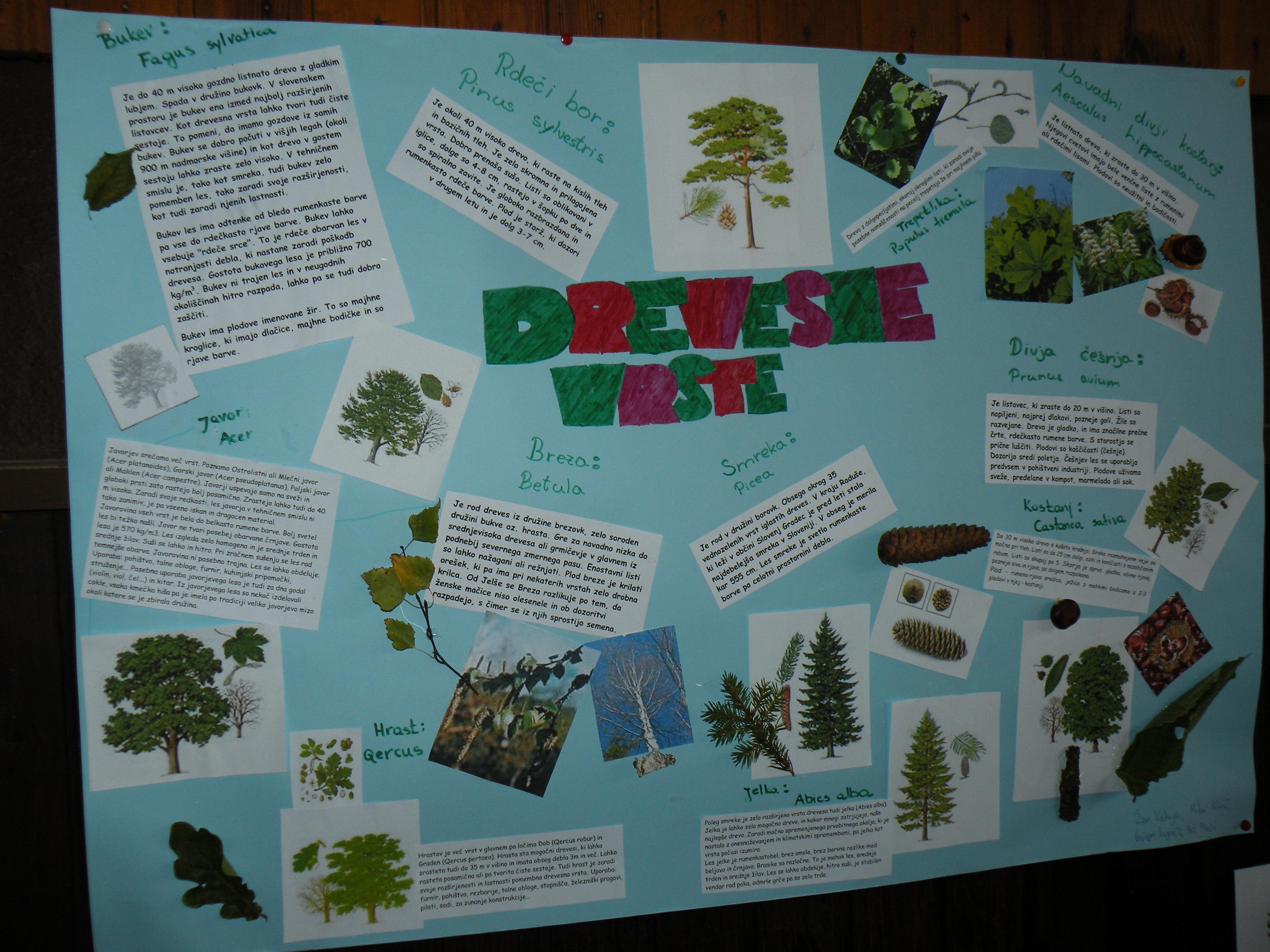 Gozd skriva zdravje in dobrote – odkrijmo jih! – zaključna prireditev