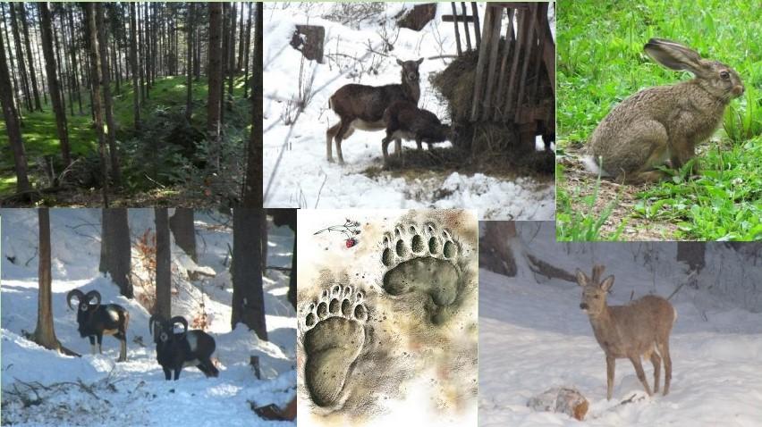 Turizem v naravi in spoznavanje, varovanje divjadi (ZOOM)-22.12.2020