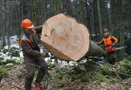 Šenčur, 22.10: Predstavitev razpisa za sofinanciranje naložb v predelavo lesa