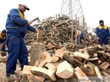 Delavnica, 24.10: Skupni sistemi ogrevanja na lesno biomaso kot priložnost
