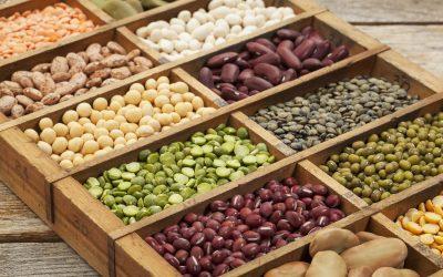 Lokalna pridelava ekoloških semen in ohranjanje starih sort , 31.8.2020